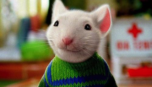 rato10